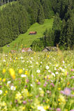 Prato delle alpi fotografie stock