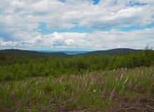 Prato delle digitali con la foresta e le colline attillate fotografia stock