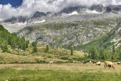 Prato delle montagne del paesaggio di HDR Fotografie Stock
