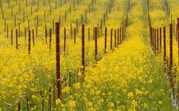 Prato delle piante di fioritura della senape in California Fotografie Stock Libere da Diritti