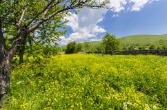Prato, denti di leone, fiori ed erba di Allgaue Fotografie Stock