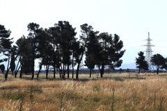 Prato di autunno del paesaggio Immagini Stock Libere da Diritti