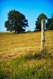 Prato di estate Fotografia Stock Libera da Diritti