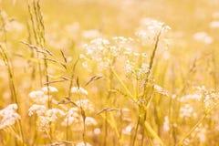 Prato di estate Fotografia Stock