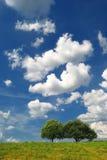 Prato di estate con gli alberi Fotografie Stock Libere da Diritti
