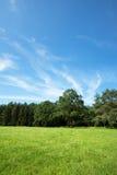 Prato di estate con parecchi alberi nel fondo Fotografia Stock