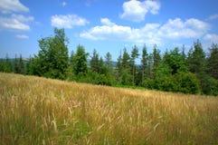 Prato di estate della montagna Immagine Stock