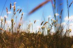 Prato di fioritura belle erbe Immagine Stock