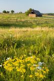 Prato di fioritura con un vecchio granaio Immagini Stock