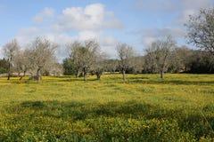 Prato di fioritura idilliaco sull'isola di Maiorca, Spagna Fotografie Stock