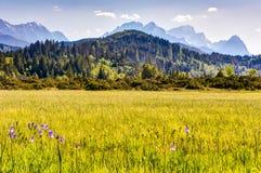 Prato di fioritura nelle alpi bavaresi Fotografie Stock Libere da Diritti