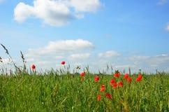 Prato di fioritura sotto il cielo blu Fotografia Stock