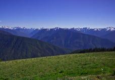 Prato di paesaggio e del greem della montagna Fotografie Stock