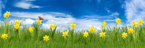 Prato di Pasqua Fotografia Stock Libera da Diritti