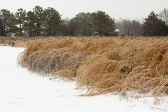 Prato di Snowy Fotografia Stock