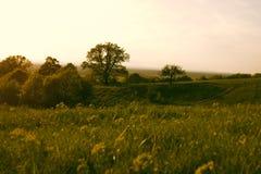 Prato di tramonto con i fiori gialli Fotografia Stock Libera da Diritti