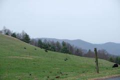 Prato di verde del lato della collina con bello backfground fotografia stock