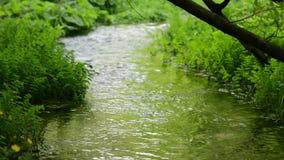 Prato di verde dell'acqua di ruscello stock footage