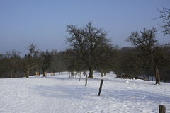 Prato di Winterly Immagini Stock