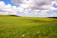 Prato e cielo Fotografia Stock Libera da Diritti