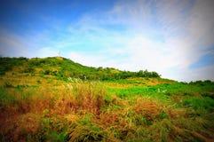 Prato e cielo blu dell'erba Fotografia Stock Libera da Diritti