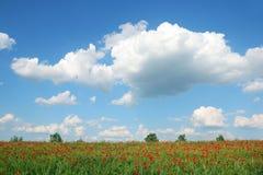 Prato e cielo blu della sorgente Immagine Stock