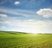 Prato e cielo blu verdi Fotografia Stock Libera da Diritti