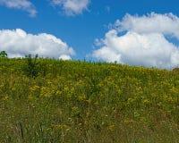 Prato e cielo di estate Fotografia Stock Libera da Diritti