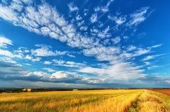 Prato e cielo nuvoloso fotografia stock