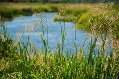 Prato e fiume dell'erba selvatica su fondo Fotografia Stock