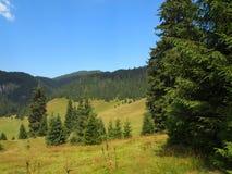 Prato e foresta della montagna Fotografie Stock