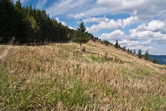 Prato e foresta di autunno intorno sul passaggio di Priekova sopra Zuberec Fotografia Stock