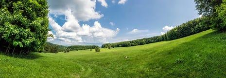 Prato e foreste, foto panoramica fotografia stock