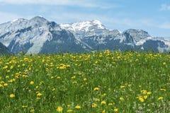 Prato e montagna Fotografia Stock Libera da Diritti