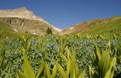 Prato e montagne fotografia stock libera da diritti