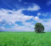 Prato ed albero infiniti Fotografia Stock Libera da Diritti
