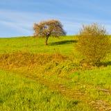 Prato ed albero in Svizzera Immagini Stock