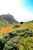 Prato edulis del Carpobrotus che circonda il faro di Cabo da Roca nel Portogallo immagini stock