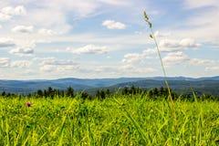 Prato erboso vibrante con il Mountain View Fotografia Stock