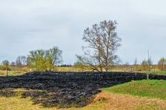 Prato fatto saltare del terreno incolto dell'incendio forestale sulla banca del fiume vicino alla foresta nel villaggio Immagine Stock