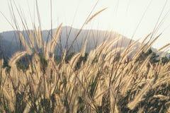 Prato Feild Outdoor Nature Background Background Fotografie Stock