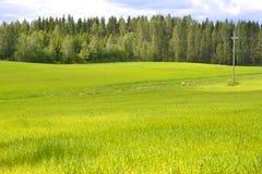 Prato & foresta Fotografia Stock
