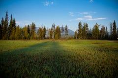Prato, foresta e montagne, Montana Fotografia Stock