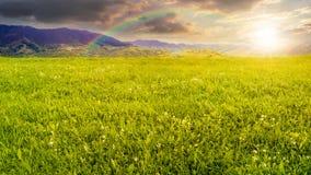 Prato fresco dell'erba vicino alle montagne al tramonto Fotografia Stock