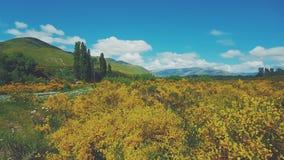 Prato giallo, Nuova Zelanda Fotografia Stock Libera da Diritti
