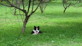 Prato inglese, alberi e cane Fotografia Stock