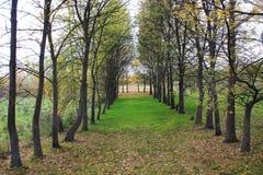Prato inglese con gli alberi Immagini Stock Libere da Diritti