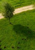 Prato inglese con i cumuli di terra sollevati dalla talpa e un albero fotografia stock