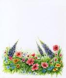 Prato inglese con i wildflowers su fondo bianco Fondo floreale dell'acquerello Fotografie Stock