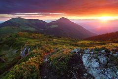 Prato inglese con le pietre ed i pini montani della traccia Paesaggio con bella alba Cielo fantastico, alte montagne immagine stock